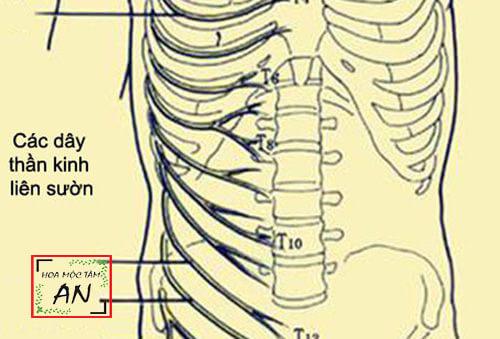 Bài tập chữa đau dây thần kinh liên sườn