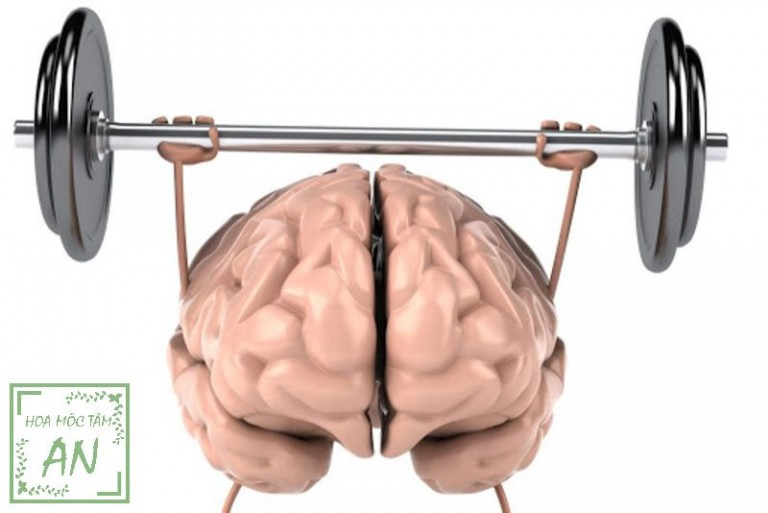 Cách tăng cường máu lên não tự nhiên